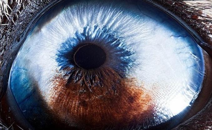 Sizce bu nedir? İşte farklı canlılardaki yakın çekim görüntülerinin büyüleyici görselleri