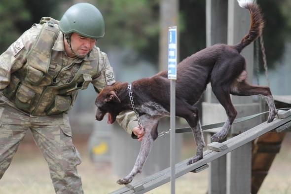 Türk Silahlı Kuvvetleri (TSK) tarafından üretimi ve eğitimi yapılan yerli ırk Zerdava cinsi köpekler, sınır ötesi operasyonların vazgeçilmezi olacak. Trabzon yöresine has Zerdava, terör bölgelerinde bomba ve mayın arayıp teröristlerin izini sürecek.