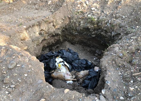 Giresun'da çukurda 10 ölü köpek bulundu