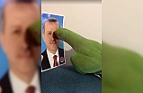 Sosyal medya fenomeni papağanın Erdoğan sevgisi