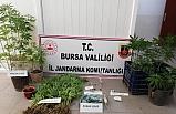 Bursa'da jandarmadan uyuşturucu operasyonu: 5 gözaltı