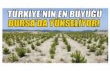 Türkiye'nin en büyüğü Bursa'da yükseliyor