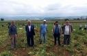 Yenişehir'de bezelye hasadı başladı