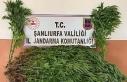 Şanlıurfa'da uyuşturucu operasyonuna 7 tutuklama