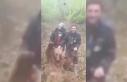 Vurdukları ayıyı yumruklayan avcılar, kamerada
