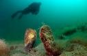 Denizlerin temizleyicisi pinaları öldüren virüs,...