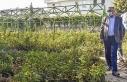 Bursa'da tıbbi ve aromatik bitki atağı