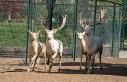 Malatya hayvanat bahçesi kapılarını ziyaretçilerine...
