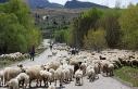 Yayla mesaisini tamamlayan Doğu Anadolu'daki göçerler...