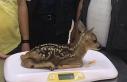 Kastamonu'da 2020 yılında 79 yaban hayvanı tedavi...