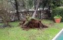 Marmaris'te yağmur ve fırtına ağaçları devirdi