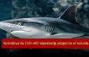 Kolombiya'da 3 bin 493 köpekbalığı yüzgecine...