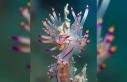 Diver photographs tiny underwater inhabitants