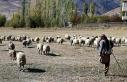 Tek bacağıyla 250 koyuna çobanlık yapıyor