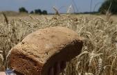 Ata tohumlarının buğdayından ekmek yapıp satıyor