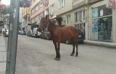 Bursa'da başı boş at paniği