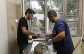 Pitbull'un saldırdığı gebe kedi öldü, sahibine 7 bin TL ceza