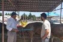 Hayvan pazarında değnekli satış