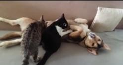 Öksüz kedilerin annesi oldu