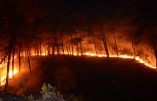 Yılın son ayında da orman yangınları bitmedi