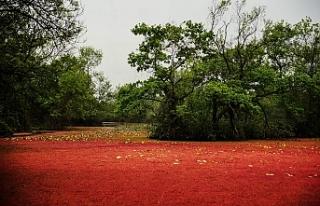 Karacabey Longozu kırmızıya boyandı