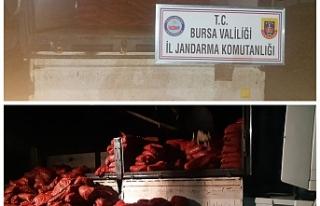 Bursa'da midye operasyonu!