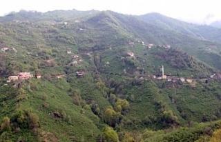Köy icralık oldu! Kemal Sunal filmi...