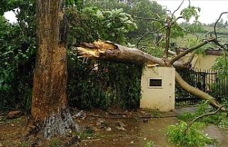 Hindistan'daki Fani kasırgasında 8 kişi hayatını...