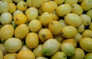 Şampiyon Limon