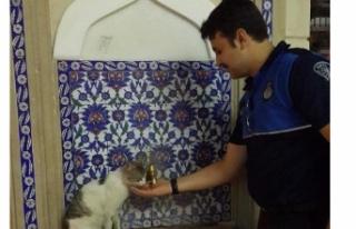 Susuz kalan sokak kedisine zabıta memuru eliyle su...