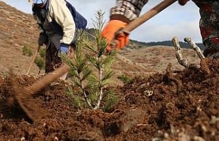 Sosyal medya kullanıcısının 'Ağaç Dikme...