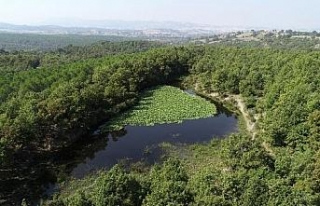 Nilüfer Gölü güzelliği ile ilgi görüyor