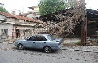 Pamukkale'de otomobilin üzerine kavak ağacı...