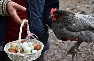 Bursa'da üretilen yumurtalara ilgi büyük