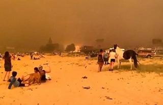 Orman yangınlarında 'göç' riski