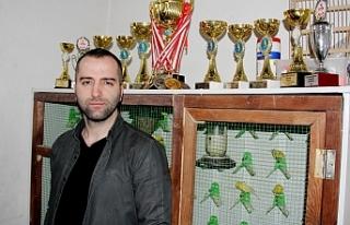 Bursa'da yarışmaların gözde kanaryalarını...