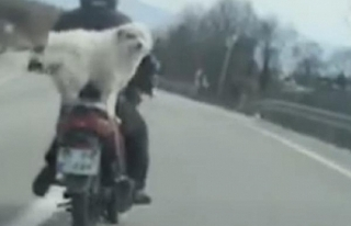 Motosikleti görenler şok oldu!
