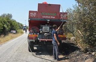 Çanakkale'de zeytinlik yangını