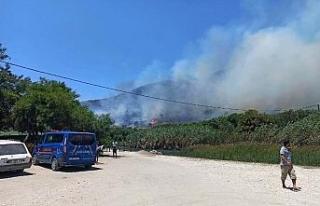 Seydikemer'de ormanlık alanda yangın çıktı