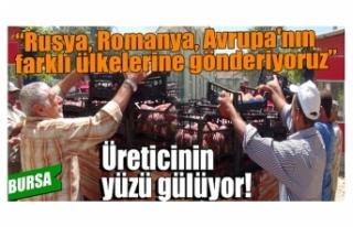 Bursa'da şeftali üreticisinin yüzü bu yıl...