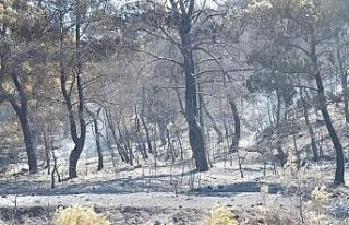 Manisa'da 300 hektar alan küle döndü