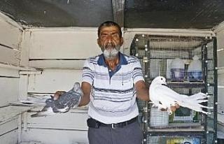 Ailesinin güvercin besleyen 3'üncü kuşak...