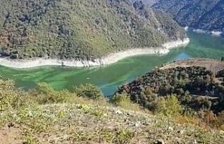Baraj yeşile boyandı, ölü balıklar kıyaya vurdu