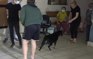 Ev yangınında dumandan etkilenen köpeği itfaiye...