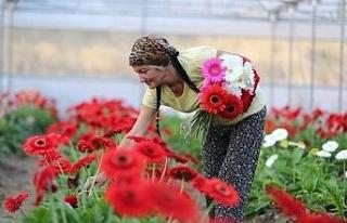 Hobi olarak çiçekçiliğe başladı, kurduğu seralarda...