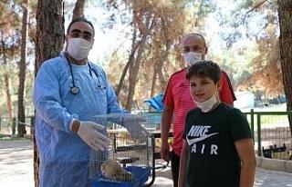 (Özel) Nesli tükenin baykuş yaralı bulundu