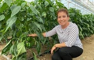 Ziraat mühendisi kadın çiftçi hem üretiyor hem...