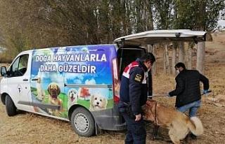 Yozgat'ta bahisle köpek dövüştüren 8 kişi...