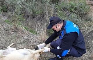 Adana polisi sokak köpeklerini unutmadı