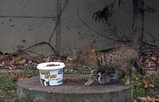 Büyükçekmece'de sokak hayvanları kısıtlamada...
